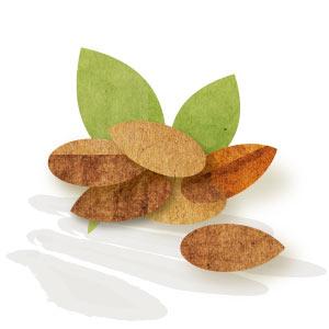 Fruita seca Ecològica