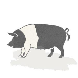 Porc ecològic